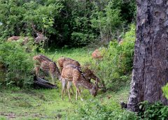 National Park in India