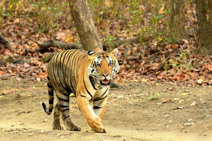 Kanha National Park in India