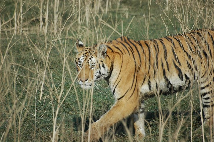 Pench National Park in India