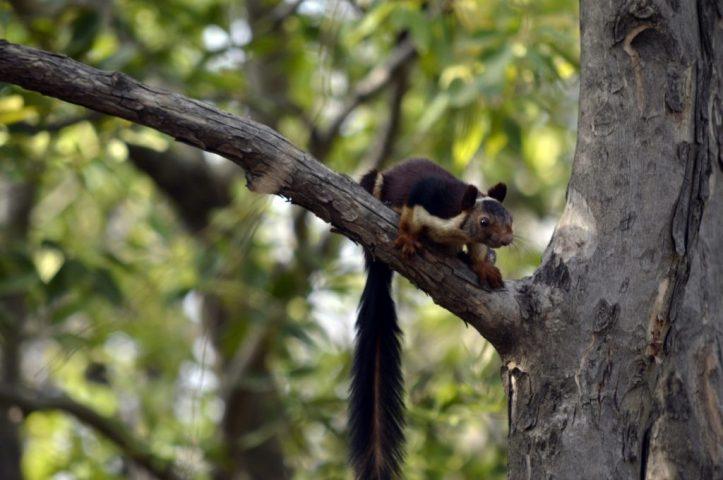 Satpura National Park in India