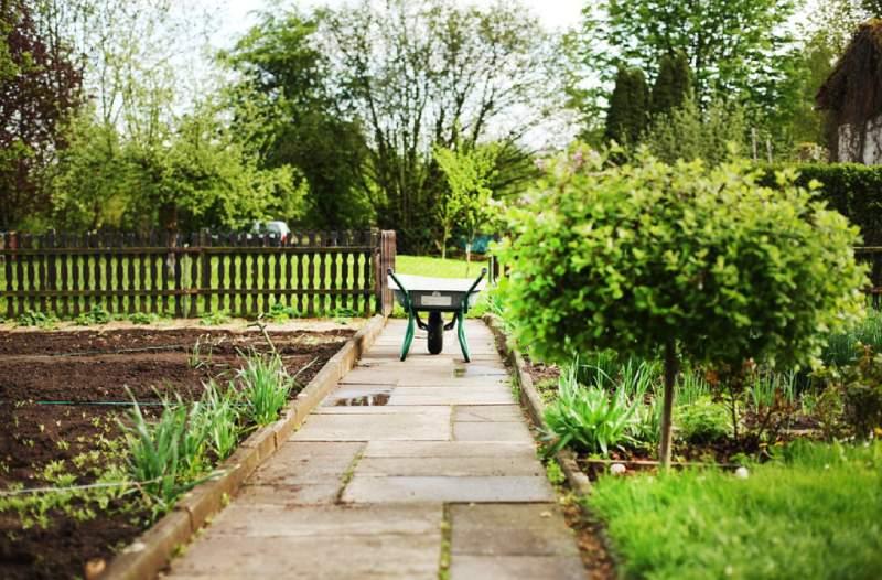 garden maintenance tips